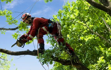 find trusted rated Falkirk tree surgeons
