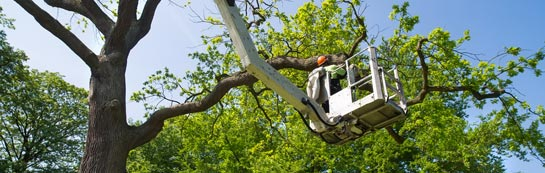 Falkirk tree surgery services