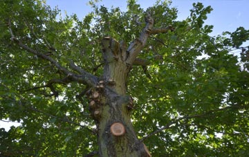 what is Falkirk tree surgery?
